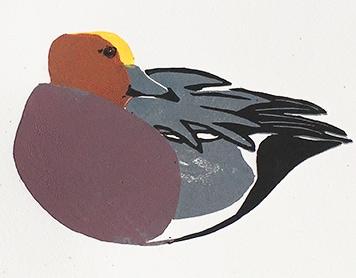Welney – Sketching birds