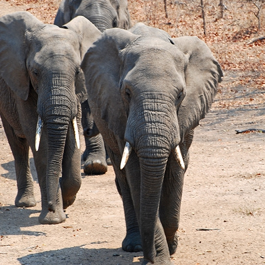 Bespoke Safaris