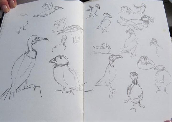 Art Safari Northumberland, seabird sketches