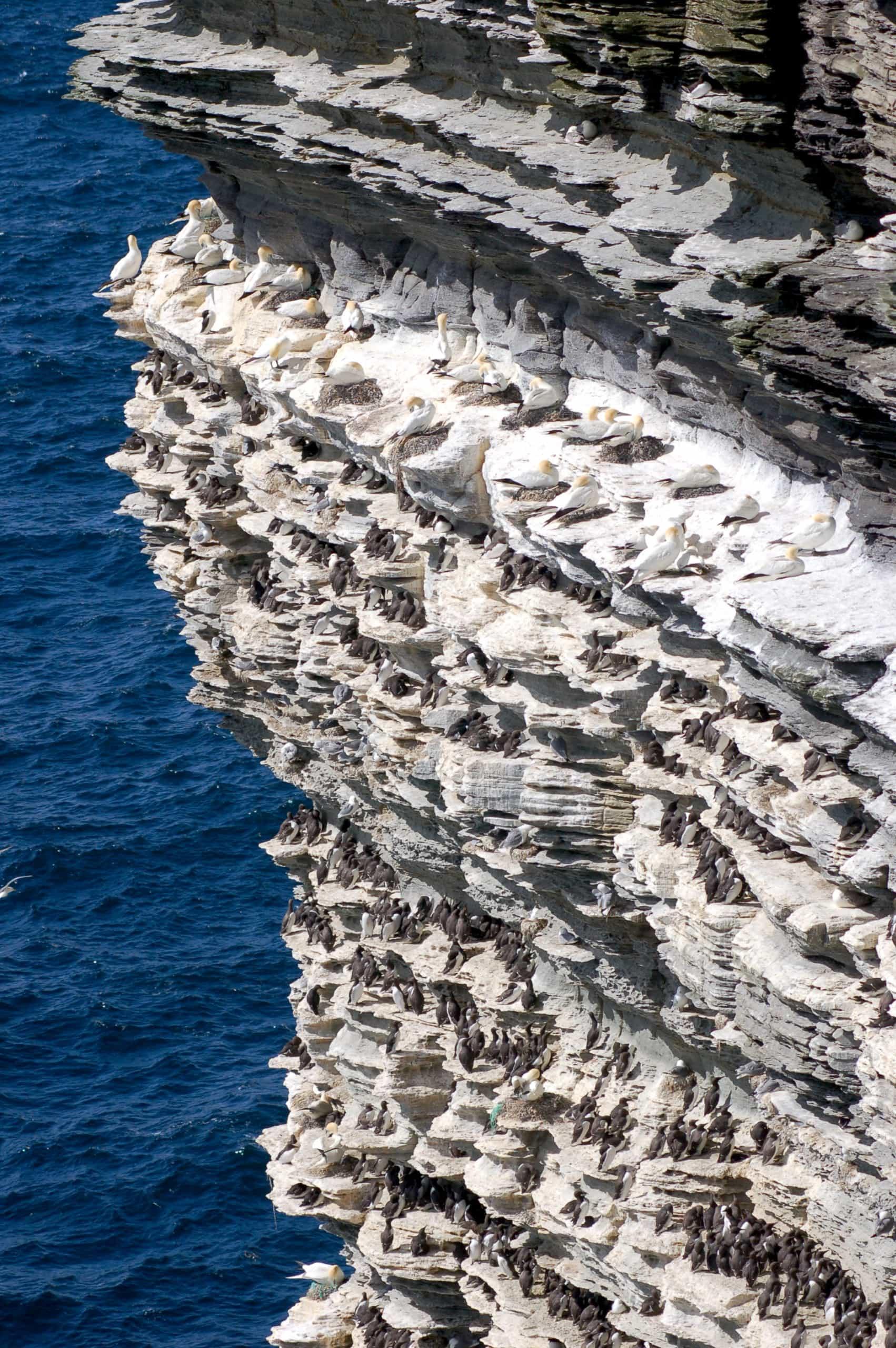 Art Safari Orkney, seabird colony