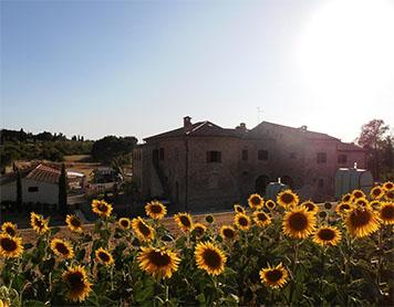 Under a Tuscan Sun (virtual)