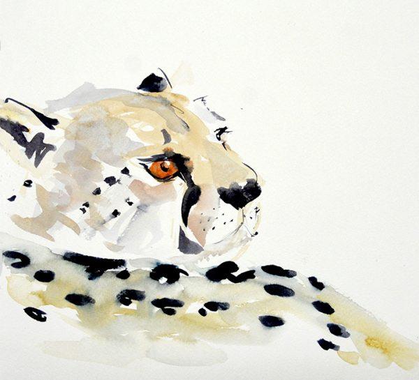 Art Safari Namibia, Cheetah Sketch by Mary-Anne Bartlett