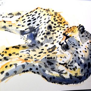 Cheetah sketch - Mary-Anne Bartlett