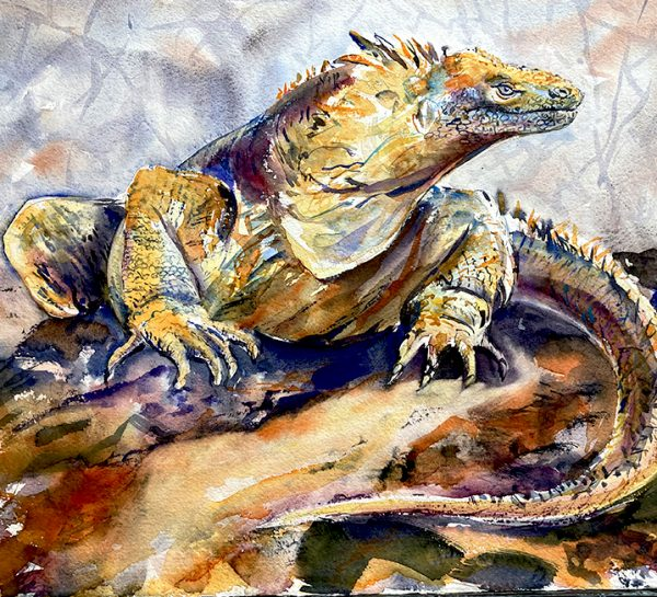 Land iguana, Galapagos by Mary-Anne Bartlett