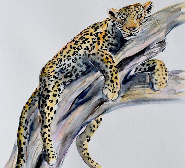 Leopard in South Luangwa by Mary-Anne Bartlett