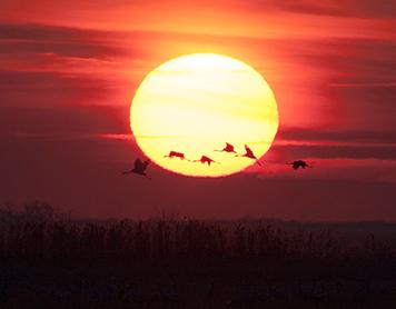 A celebration of cranes, Hungary