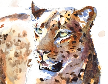 Virtual wildlife in watercolour – spotty cats