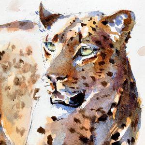 Leopard by Julia Cassels