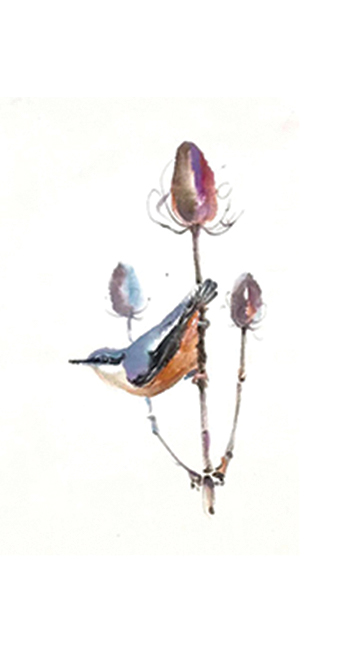 Nuthatch by Karen Pearson