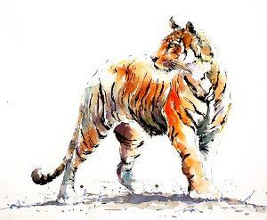 Tiger Stripes by Julia Cassels